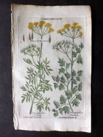 Hill & Culpeper 1792 HCol Botanical Print. Common & Spotted Chervill
